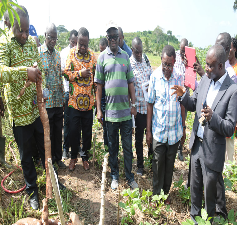 Inspection of the proposed cassava